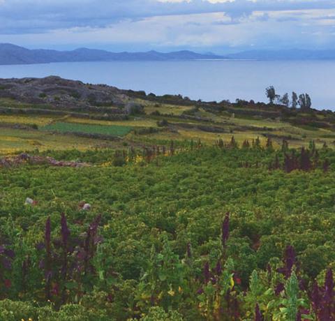 Titicaca See in Peru
