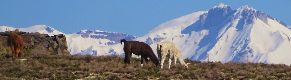 Wanderung im Altiplano auf Peru Reise