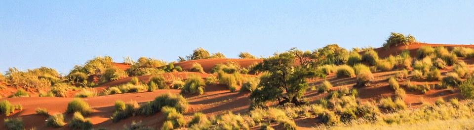 Blick in die Kalahari Wüste auf einer Namibia Reise
