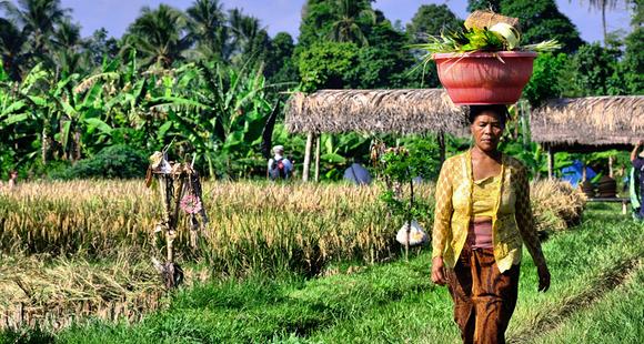 Arbeiterin auf einem Reisfeld - Indonesien