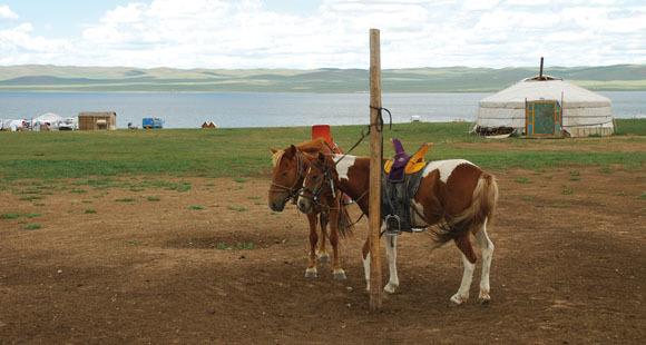 Pferdetrek in der mongolischen Steppe