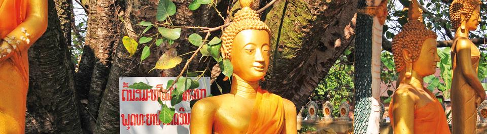 Buddha Figur an einem Baum in Vientiane in Laos