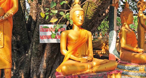 Goldene Buddha Figuren an einem Baum auf einer Laos Reise
