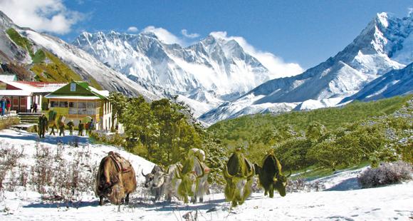 Vom Wanderweg aus sehen wir eine Yak Herde in unmittelbarer Nähe einer Trekking Lodge auf dem Weg nach Namche Bazar hier auf unserer Trekking Reise in Nepal