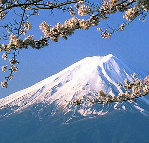 Berg Fuji mit Kirschblüten im Vordergrund in Japan