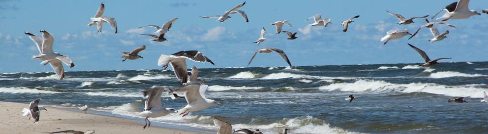 Polen Reisen, Polen Gruppenreisen, Möwen am Strand von Polen